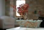 Tao's Center, Paros, Greece, pink bonzai