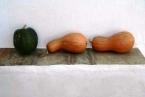 Tao's Center, Paros, Greece, pumpkins