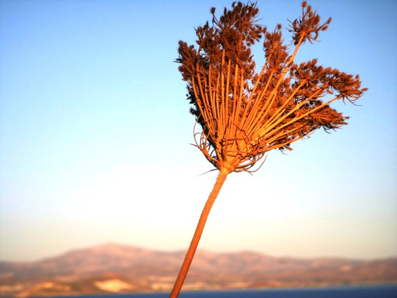 Tao's Center, Paros, Greece, torn in the wind