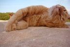 paros cats | tao's greece