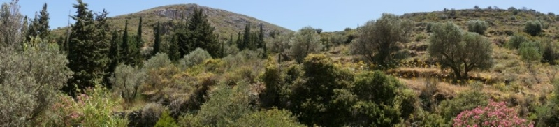 greek nature| Tao's Center| Paros| Greece