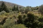 greek nature| Tao's Center| Paros| Greece