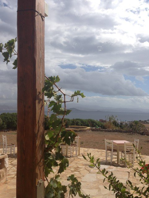 vine leaves | greek islands vacation | taos center | Paros | Greece
